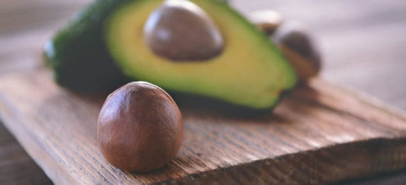 growing-an-avocado-tree-from-seed