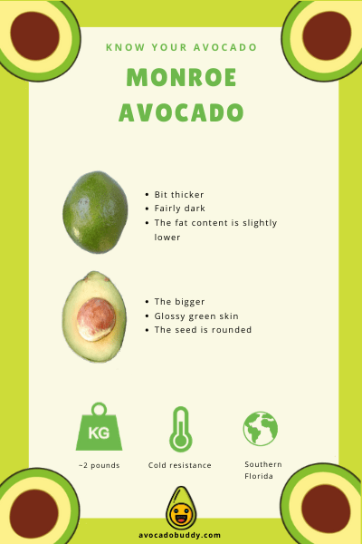 Know Your Avocado: The Monroe Avocado 1