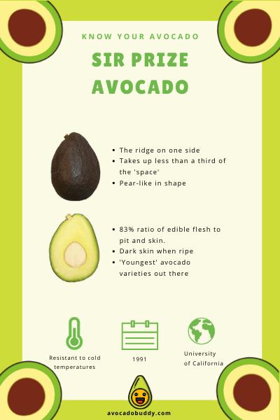 Know Your Avocado: The Sir Prize Avocado 1