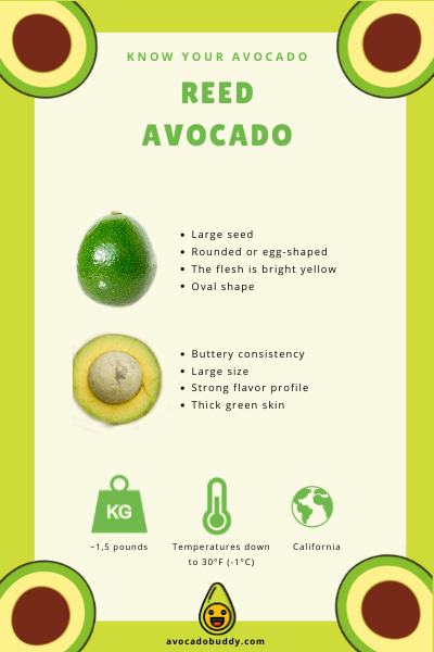 Know Your Avocado: The Reed Avocado 1