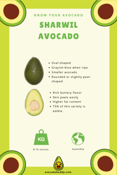 Know Your Avocado: The Sharwil Avocado 1