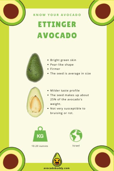 Know Your Avocado: The Ettinger Avocado 1