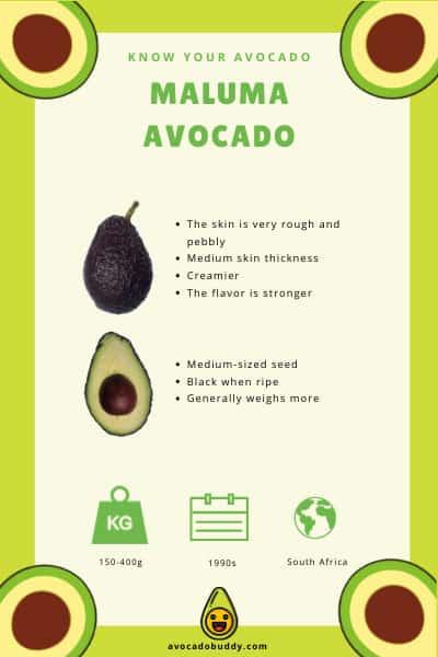 Maluma Avocado